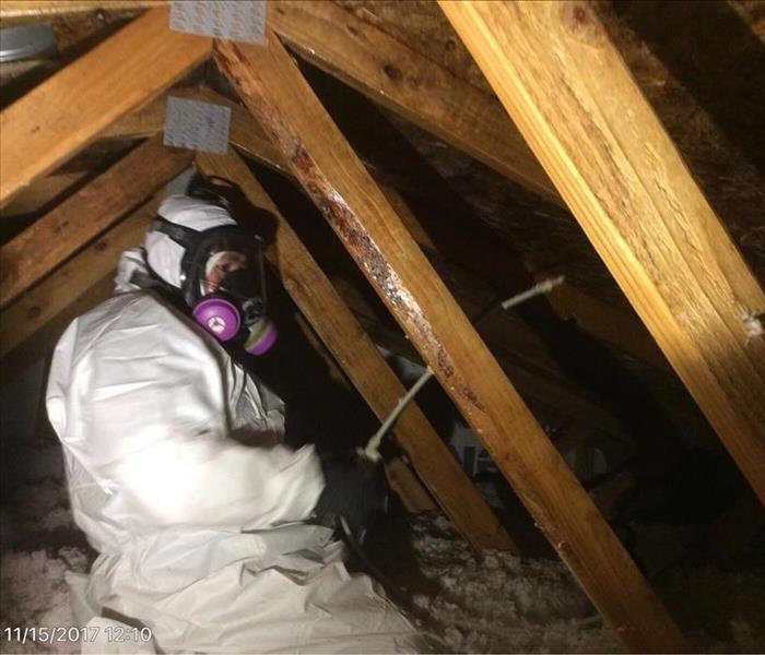 Our professionals removing Mold in attic