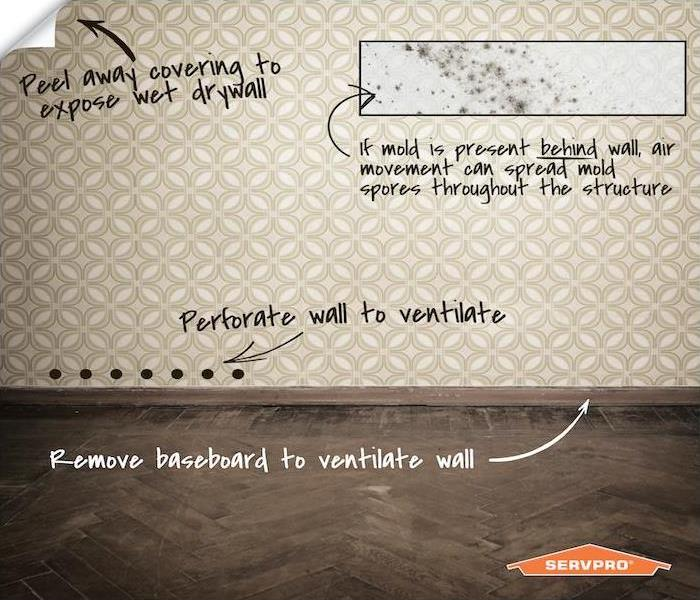 infographic about wallpaper