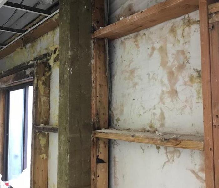 Mold Remediation Take Precautions With Mold